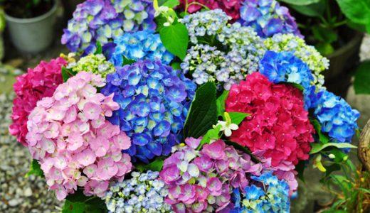 紫陽花の名所|埼玉のあじさい名所ランキングTOP10+2選