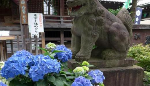 紫陽花の名所、東京 白山神社の文京あじさいまつり2018時期や見ごろ